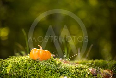 Mini orange pumpkin