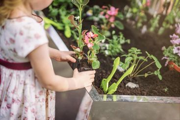 Unrecognizable cute little girl holding seedlings of...