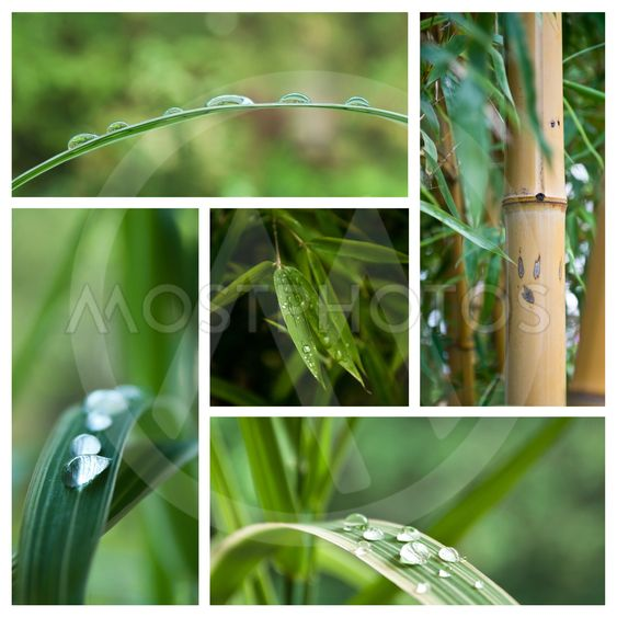 raindrop on bamboo