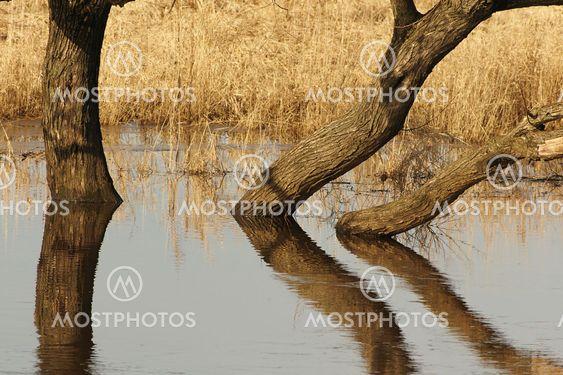 Afspejles træer