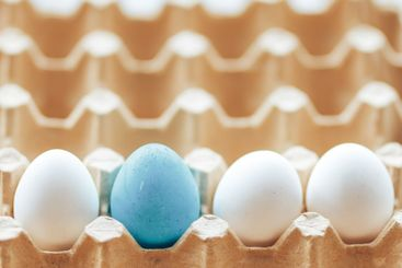 carton cell egg tray white eggs and one colored tray for...