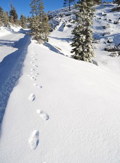 Snowy Foot Prints