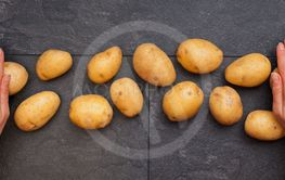 Woman hands and yellow potatoes on table - top view