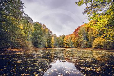 Lake covered with autumn leaves
