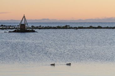 Två gräsänder simmar i Galtabäcks hamn - Silvertid