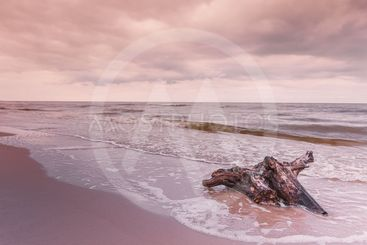 Tree root on sea shore, nature landscape