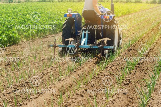 A farmer cultivates vegetable rows of leek. Plowing...