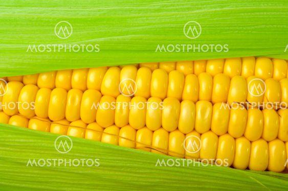 Fresh corn close up on white