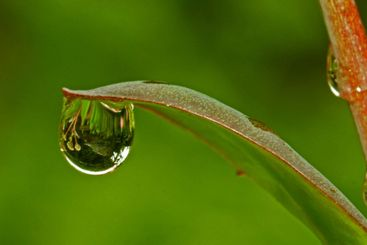 Reflection in drop