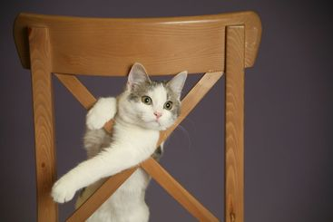 Cat And Chair