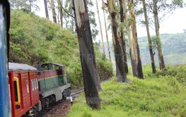 Train in wood