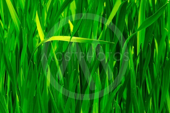 Sömlös green grass