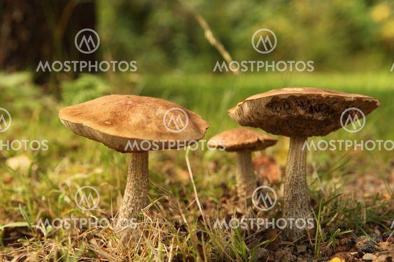 En svamp