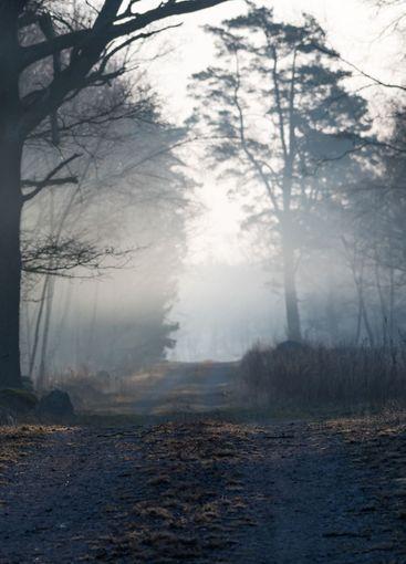 Morgondis vid en skogsväg