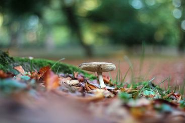 Mushroom on ground in the forest