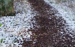 Slingrande stig i Slottsskogen i Borgholm på Öland