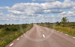 Väg med vägkantsblommor över Ölands alvar