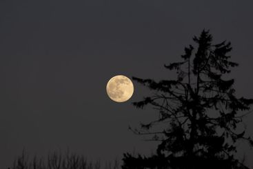 Full moon and a tree silhouette.