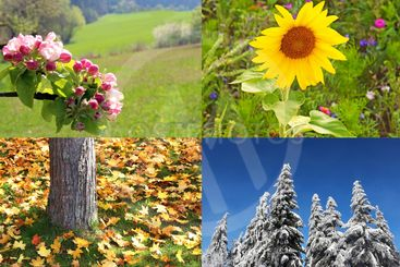 four seasons springtime, summer, autumn and winter...