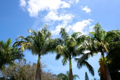 Palm Trees in Sao Paulo