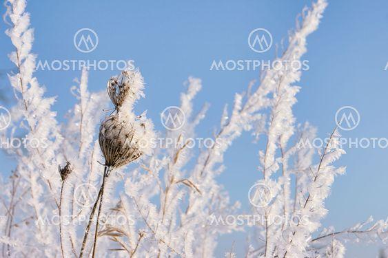 Garten Im Winter Garden I By Lianem Mostphotos