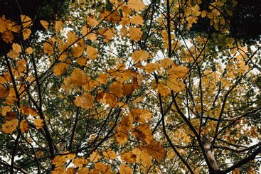 Background of autumnal leaves in the forest with trees...