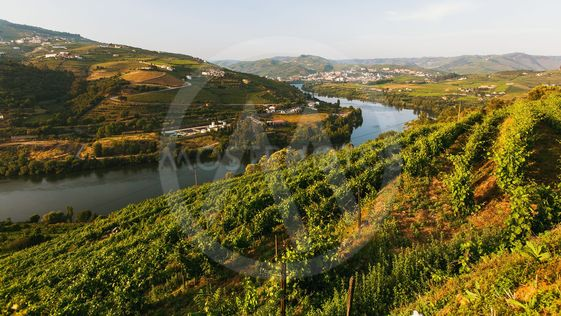 View of the Douro river, and vineyards are on a hills in...