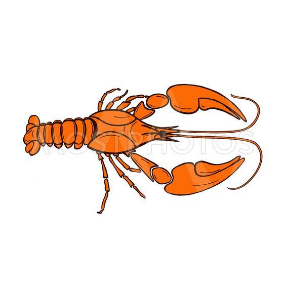 crawfish оранж