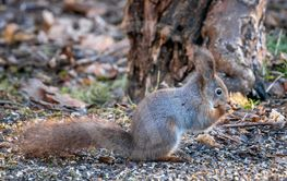 Cute little squirrel eating a nut below a tree