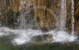 _MG_137715845 natur Kroatien
