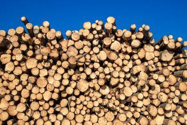 Cuts logs against the blue sky