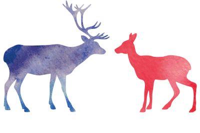Watercolor deer.