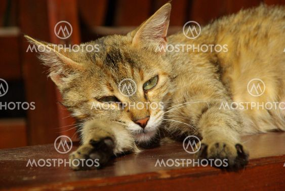 Katze - cat 15