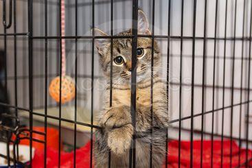 Elegant kitten at the shelter