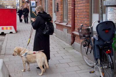 Blind kvinna med ledarhund