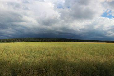 Rising dark clouds above cornfield in Bad Münstereifel...