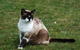Mysig och färgglad katt  2(2) (Sweden)