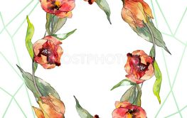Red tulip floral botanical flower. Watercolor background...
