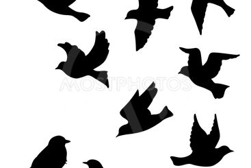Set of birds silhouettes - flying, sitting.
