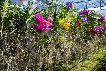 Bai Orchid and Butterfly Farm at Chiang Mai, Thailand