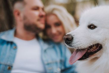 Spouses with samoyed breed dog are enjoying their weekend