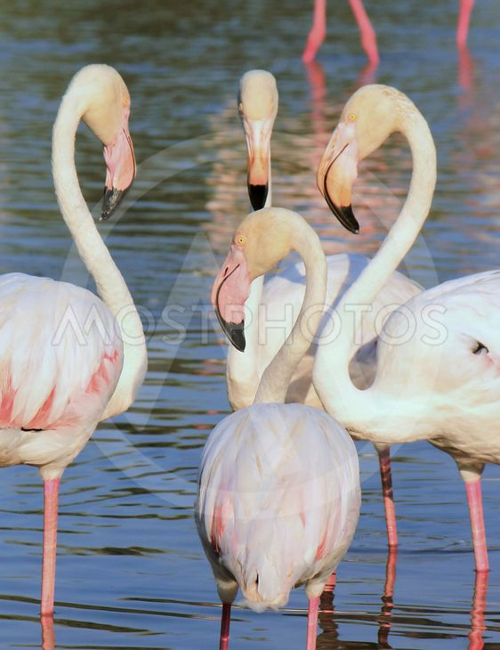 Flamingos meeting