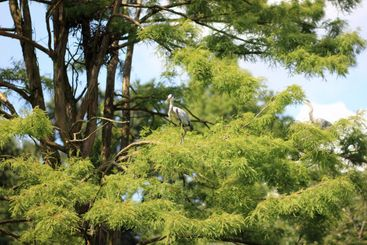 Stork in the branches of a tree
