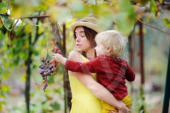 Young beautiful girl and little child picking mellow...