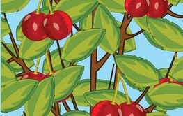 Branches with green foliage and berry sweet cherries