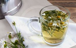The flowers of the medicinal chamomile a decoction of...